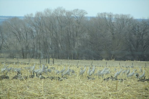 Flock-1