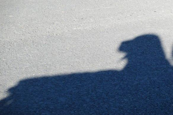 Shadow-Boomer