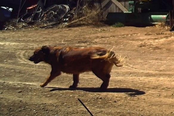 Run with Hank