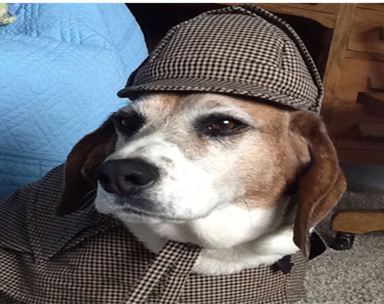 Sherlock-Boomer-in-Hat