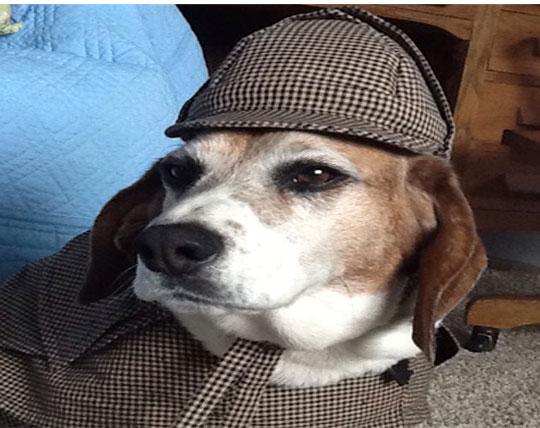 Sherlock-Boomer-in-Hat