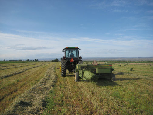 baling-hay (1)