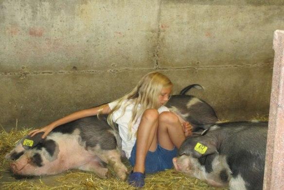 Linky's-pigs