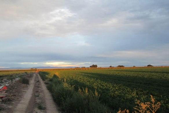 Crop-Hay