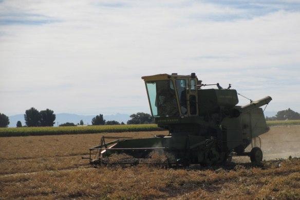 Harvest-2015