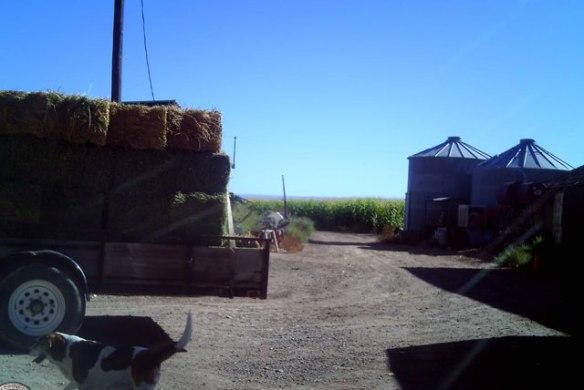 Hay-Customer