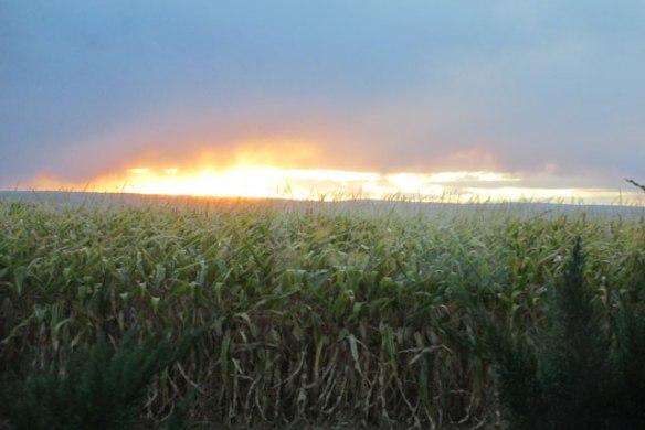 Corn-and-Sun-1