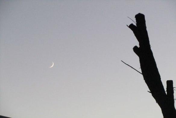Crazy-Moon