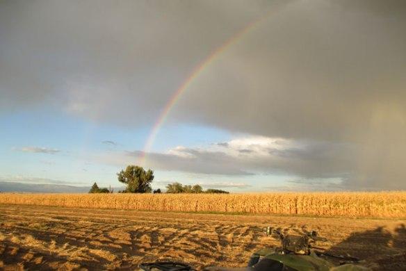Rainbow-7