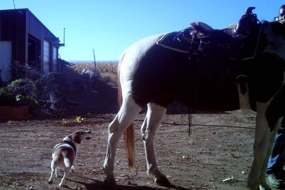 Good-Horse
