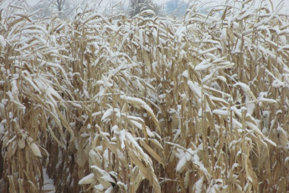 Snowing-again-1