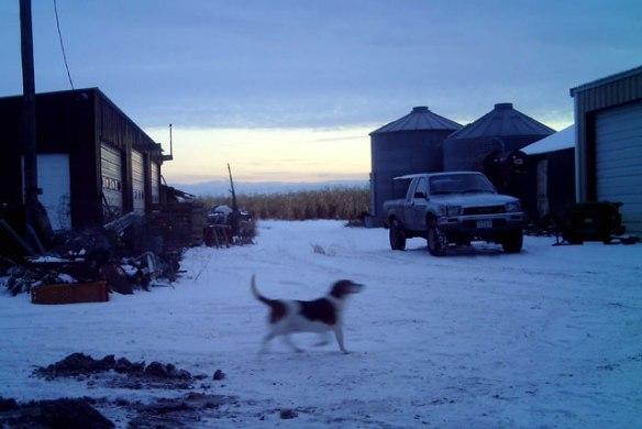 Blue-Beagle