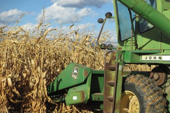 Corn-Harvest-2015-b