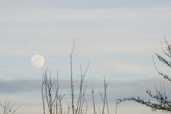 January-Wolf-Moon