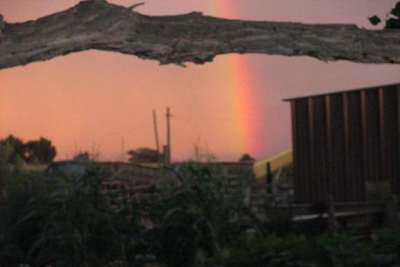 Rainbow-and-tree