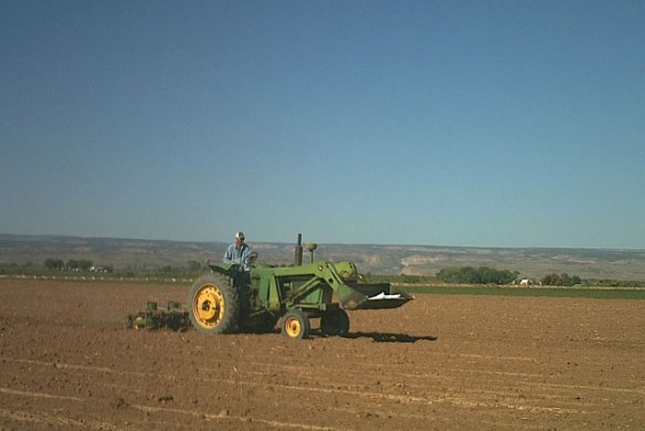 Planting-Pintos