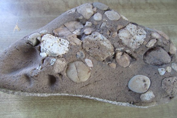Fossils-1