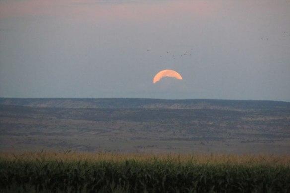 Cloud,-birds-and-Moon