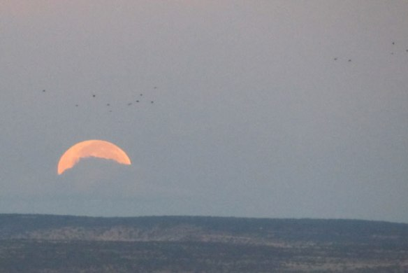 Clouds-Birds-and-Moon2