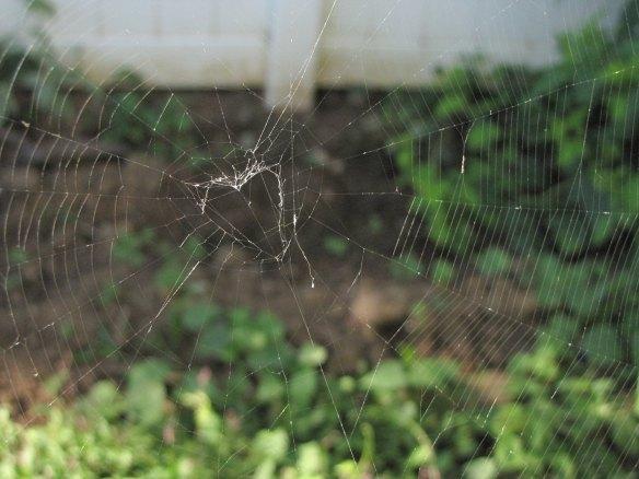 Heart in a web