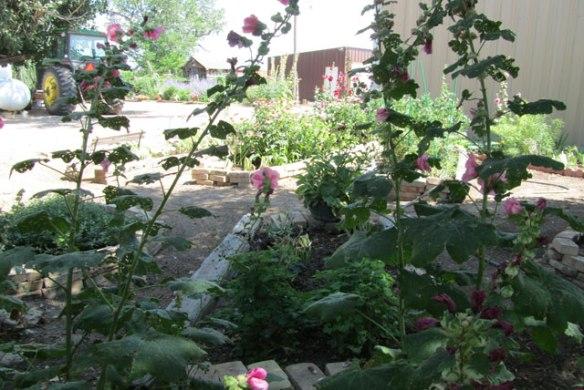 My-yard