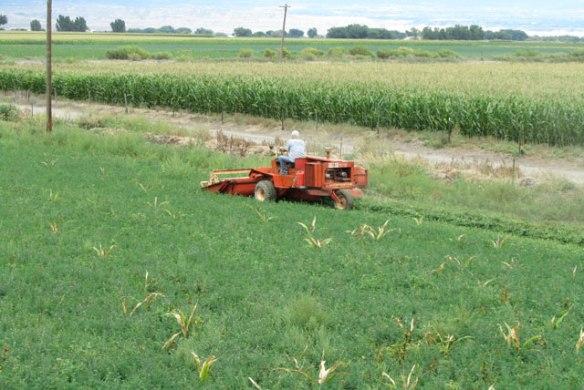 New-Hay-Field-1