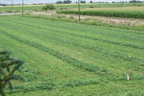 New-Hay-Field