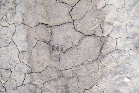 Tiny-footprint-1