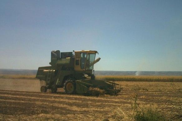 bean-harvest