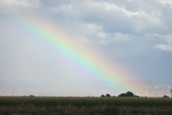 corn-field-rainbow