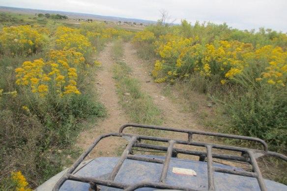 fall-on-the-farm-back-road