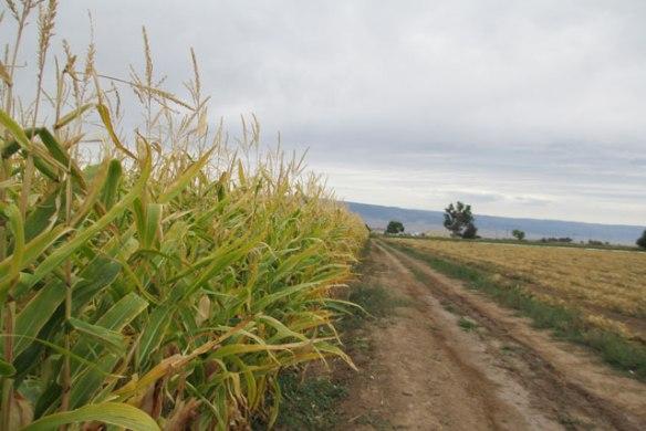 fall-on-the-farm-road
