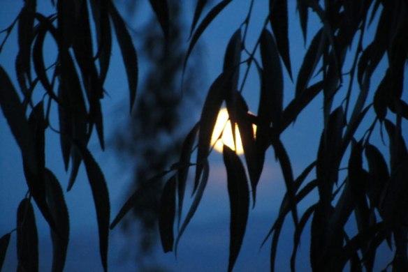 moon-in-tree