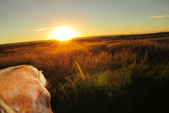 sunset-on-the-pastures