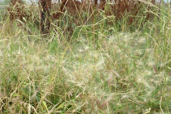 weed-seeds