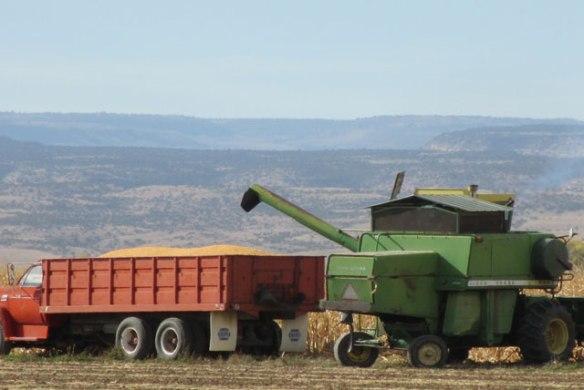 corn-harvest-002