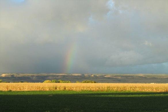 i-love-rainbows-004