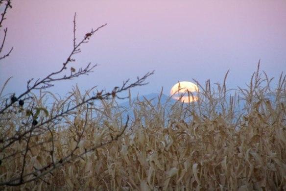 novembers-super-moon-007