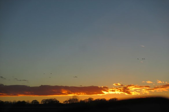 geese-in-the-sunset
