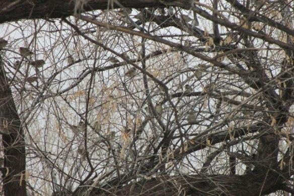 little-birds