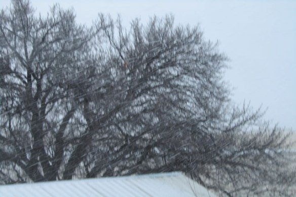 snow-storm-004