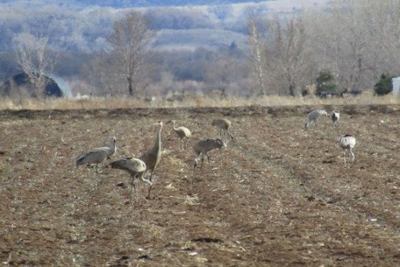 cranes-001