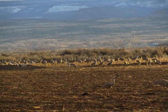cranes-008