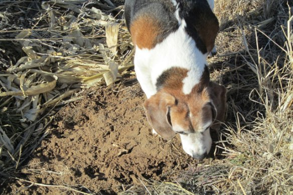 doggie-news